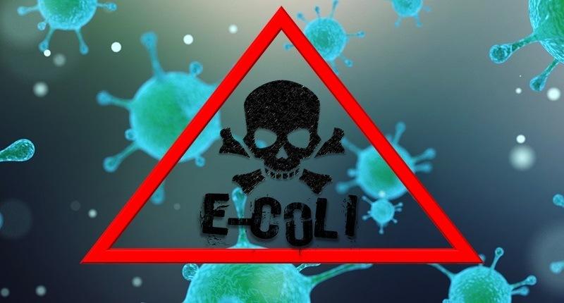 Escherichia coli (E. coli)